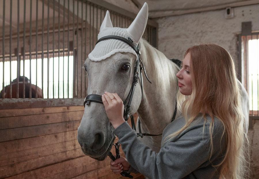 Посмотреть и покормить лошадей